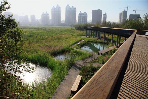 Park v Haerbin city